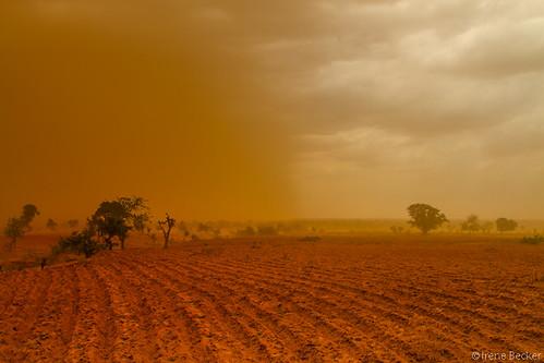 africa storm sahara geotagged sand desert westafrica nigeria sahel nigerian naija blackafrica arewa 9ja kebbistate canon7d irenebecker sahelpeople нигерија nigerianimages nigeriatravelphotography nigerianphotos imagesofnigeria irenebeckerorg