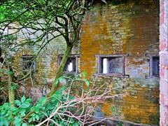 Fort Tourgis Tree - Alderney