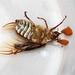 Patio beetle - bottoms up by mrsjwd9