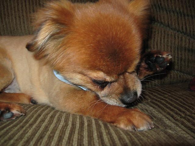 Dog Licking Paws Biting Nails