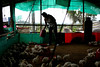 Raising poultry in Colombia by World Bank Photo Collection