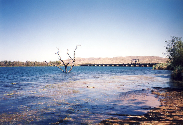 Swim Beach Tree - Ord River - Kununurra