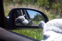 Hippo View Mirror