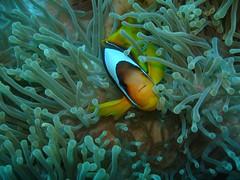 anemone fish(0.0), deep sea fish(0.0), coral reef(1.0), animal(1.0), coral(1.0), fish(1.0), coral reef fish(1.0), organism(1.0), marine biology(1.0), green(1.0), underwater(1.0), reef(1.0), pomacentridae(1.0), sea anemone(1.0),