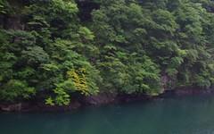 green Fukui