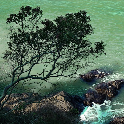 ocean sea mer tree green water rock arbol see bay coast harbor mar seaside meer mare waves pacific branches shoreline pacificocean shore coastline sanfranciscobay seashore 海 seaview seacoast greenwater oceanwave oceanrock rockyseashore treebythesea coth5 tripleniceshot viewfromthebluffs