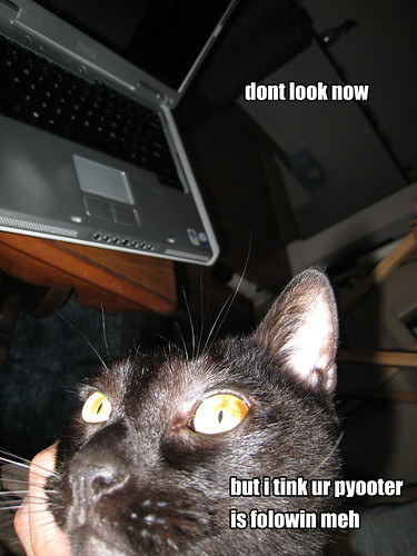 lolcat #9, cleo edition