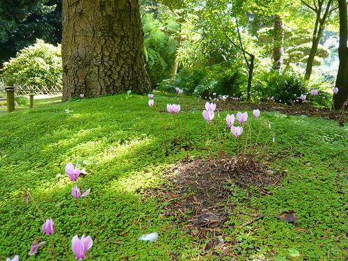 Plantes qui se divisent jardiner pratique et conomique au jardin forum de jardinage - Plante couvre sol sans entretien ...