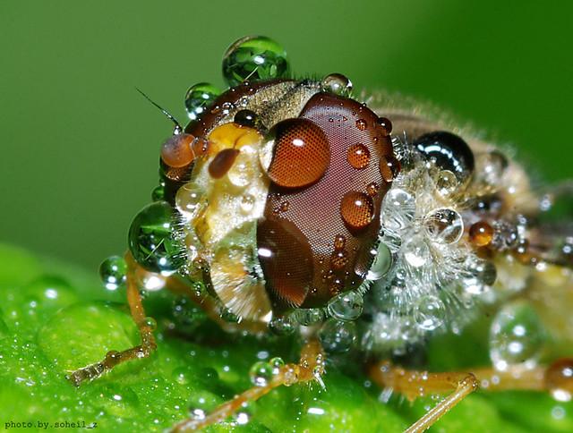 Bee by Soheil Zandazar