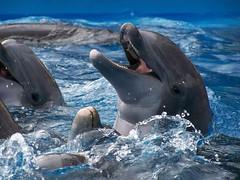 Dolphins @ Sea World San Antonio