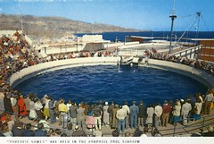 Marineland of The Pacific Postcards