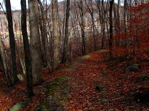 autumn nature newjersey morriscounty thetourne