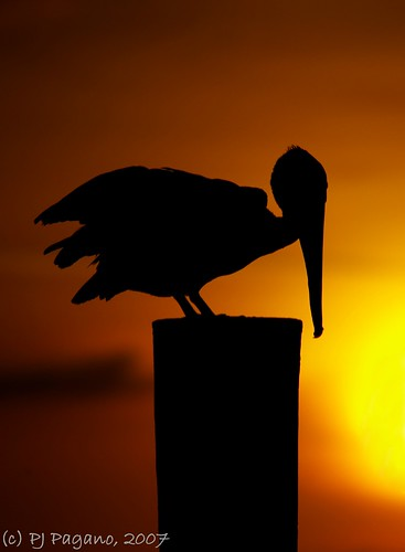 light sunset color nature night evening pentax coastline july4th brownpelican shorebird naturesfinest sigma50500mm flickrsbest k10d pentaxk10d impressedbeauty superbmasterpiece sigma50500mmex