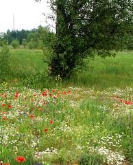 Fields&weeds.