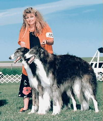 dog sports, animal sports, dog breed, animal, silken windhound, dog, sighthound, saluki, sports, pet, mammal, irish wolfhound, conformation show, borzoi,
