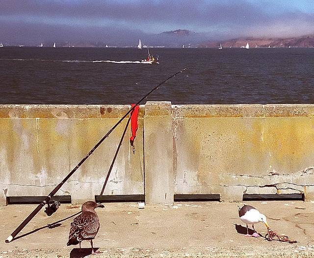 San francisco municipal pier scavengers gone fishing for San francisco fishing
