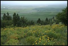 View from Kamiak Ridge