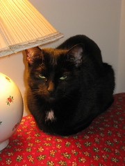 Lamp Loafing..