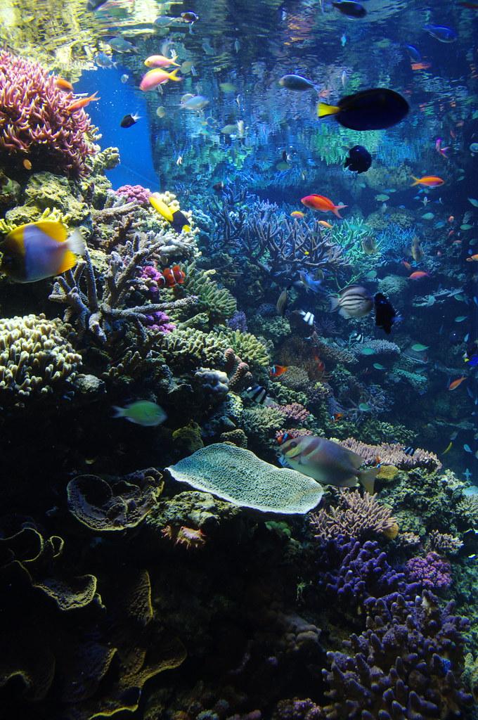Monterey Bay Aquarium Lots Of Pics