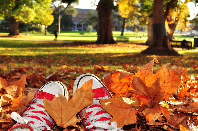 Autumn Chucks