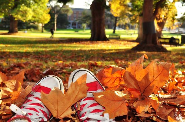 Autumn Chucks