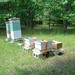 TripleBee's bees arrive at the Lighthouse Center