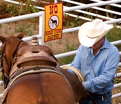 animal sports, equestrian sport, horse tack, horse, cowboy,