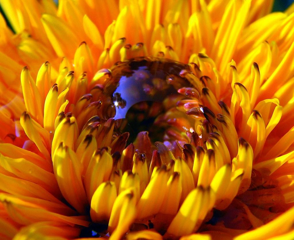 Sugarbearsteve S Most Interesting Flickr Photos Picssr