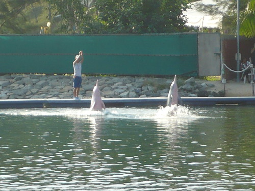 pink dolphin show in Sentosa island 2007-07-06 17-42-17