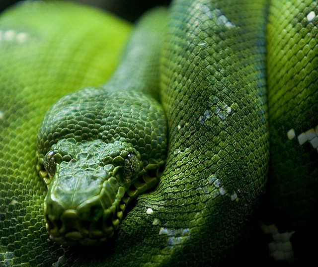 Mysterious-Snake