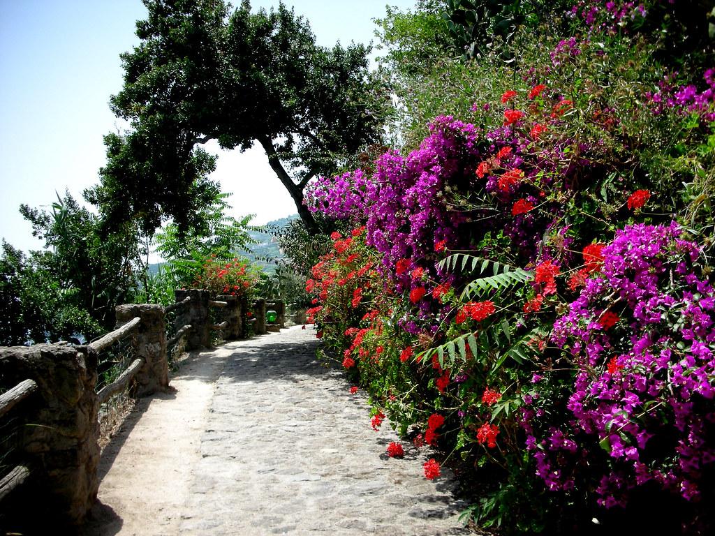 The flowery path. Il sentiero fiorito.