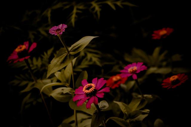 Colors in the dark (_DSC6299)