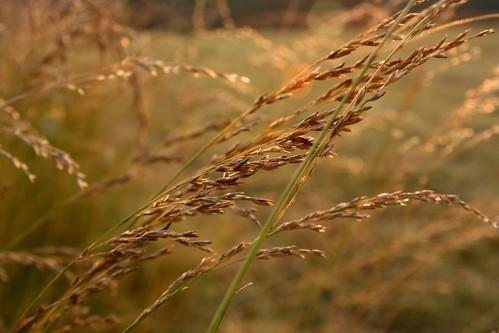 sunset golden farm missouri grandparents ozarks hayfeild ozarkempirefairthirdplace