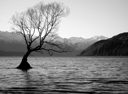 'Tree in Lake Wanaka' by Ari Brixhorn