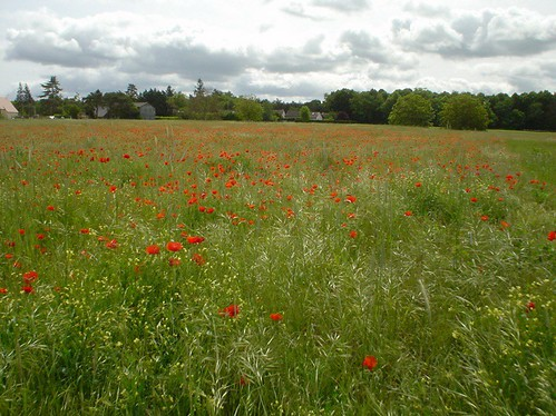 Wildflowers in Loire Valley France