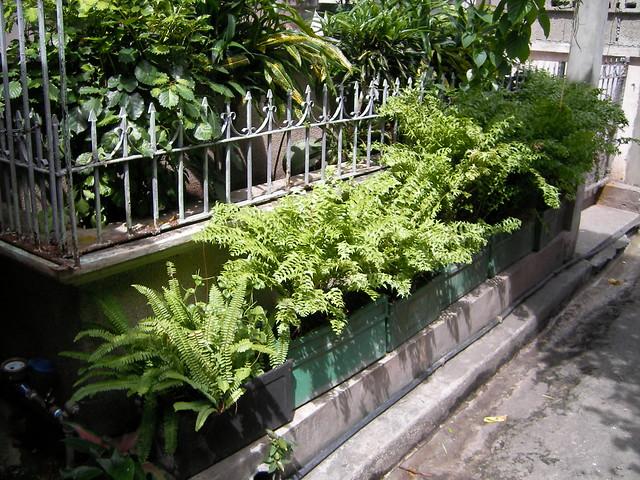 Tropical Garden Design Romblon Philippines Flickr