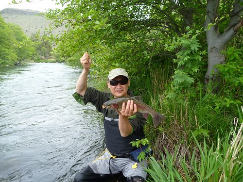 Deschutes river salmonfly photos ethan nickel outfitters for Willamette river fishing report