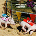 a day at the pig races 4 by shboom