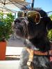 My dog Mojito