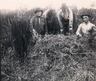 Four men with alligator nest