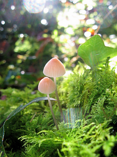 Sparkly Mushrooms