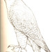 Pencil Peregrine Falcon