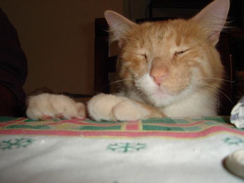 El gato (chino)