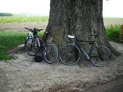 Great Burr Oak and Bikes