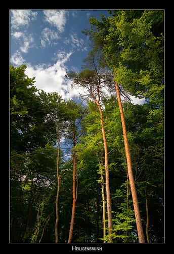 trees sky austria heiligenbrunn