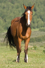 animal, prairie, mane, mare, stallion, pack animal, horse, fauna, mustang horse, meadow, pasture, grassland,