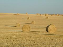 prairie, agriculture, straw, hay, field, plain, grassland,