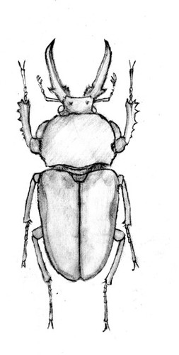 矢量插图昆虫.素描