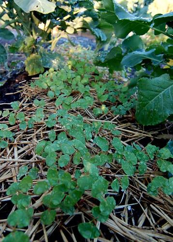 Nouveaux semis graine de jardin for Graine de jardin