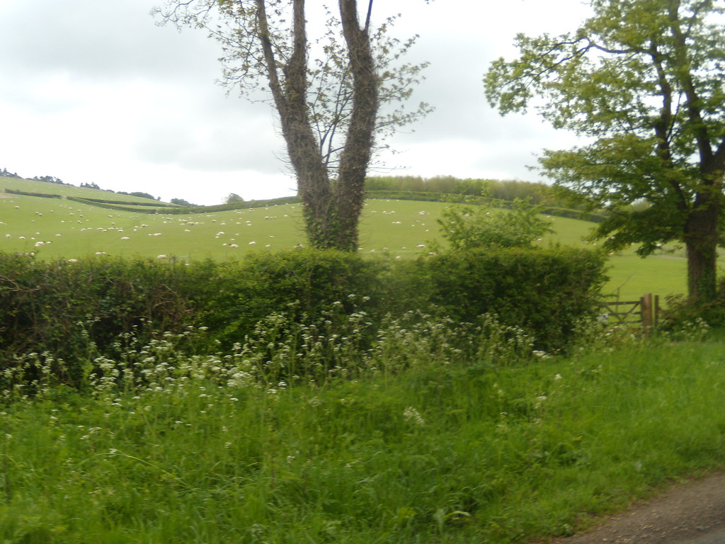 Tree and hedge Goring Circular (via Moulsford)